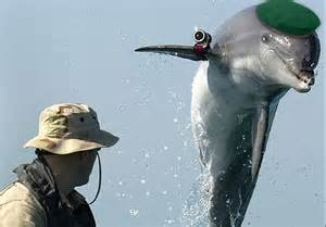 spying dolphin