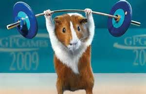 rat weight lifting